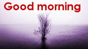 Gd Mrng Images Photo Download