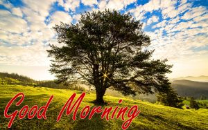 Nature Good Morning Wishes Images Pictures HD Download