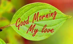 Nature Good Morning Wishes Images Pics Download In HD