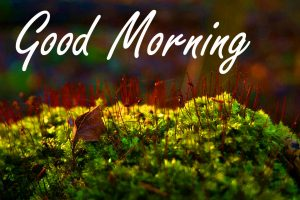 Nature Good Morning Images HD Free Download