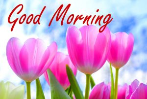 Nature Good Morning Wishes Images Pics Download