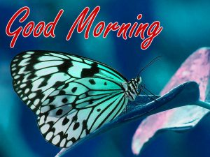 Nature Good Morning Wishes Images Photo HD Download