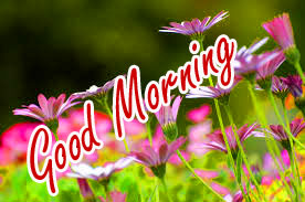 Nature Good Morning Wishes Images Photo With Flower