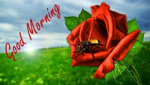 Nature Good Morning Wishes Images Pictures Wallpaper HD