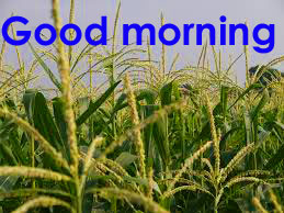 Punjabi HD Latest Good Morning Photo Pics Download