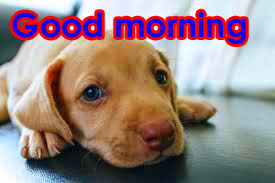 Good Morning Photo HD Download With Puppy