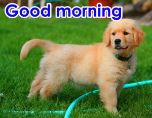 Good Morning Photo Pics Download With Puppy