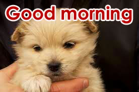 Good Morning Wallpaper Pics HD With Puppy