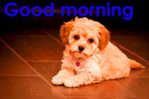 HD New Good Morning Images Photo Pics With Puppy