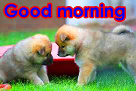Cute Good Morning Images Photo Pic With Puppy