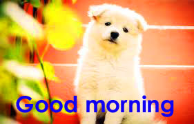 Good Morning Wallpaper Pics With Puppy