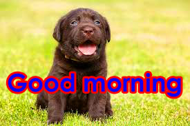 HD Good Morning photo HD With Puppy