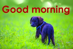 Good Morning Wallpaper Pics With Dog Puppy