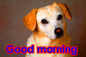 HD Good Morning Images Wallpaper Pics With Puppy