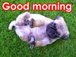 HD New Good Morning Images Wallpaper Pics With Puppy