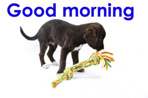 Good Morning Images Photo Pics With Puppy