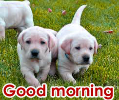 Puppy Good Morning Photo Pics Download