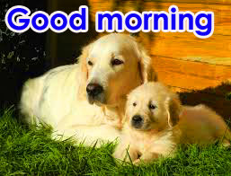 Good Morning Photo Pics HD Download With Puppy