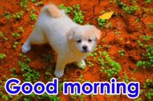 Puppy HD New Good Morning Images Pictures Download