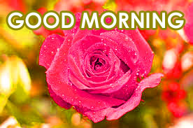 147 good morning images hd download with red rose