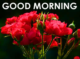 Red Rose Good Morning Images  Wallpaper Pics For Girlfriends