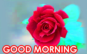 Red Rose Good Morning Images Photo Pictures Download