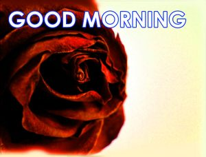Red Rose Good Morning Images Photo Pics HD Download