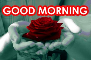 Red Rose Good Morning Images Pics Photo HD Download