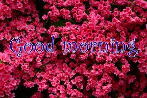 Spring Good Morning Images HD Download for Whatsaap