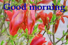Spring Good Morning Images Wallpaper Pics Download