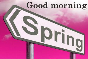 Spring Good Morning Images Photo HD Download