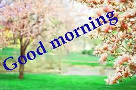 Spring Good Morning Images Wallpaper photo Download