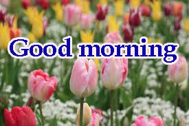 Spring Good Morning Images Pictures Download