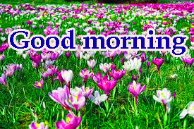 Spring Good Morning Images Wallpaper Pictures Download