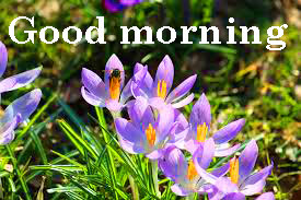 Spring Good Morning Images Photo Download