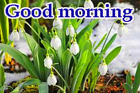 Spring Good Morning Images Pics Wallpaper Download