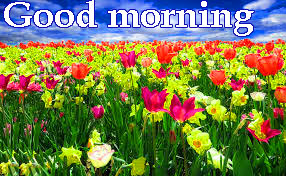 Spring Good Morning Images Photo Pics Download