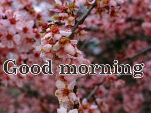 Spring Good Morning Images Pics Download