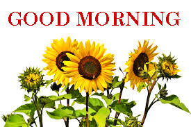 Sunflower Good Morning Images Pics Free Download