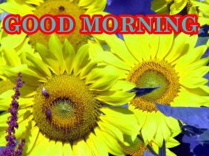 Sunflower Good Morning Images Pics Wallpaper Download