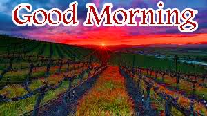 Sunrise Good Morning Images Pictures Free Download