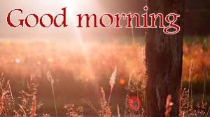 Sunshine Good Morning Images Photo Pics Download