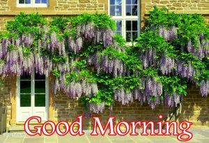 Wonderful Good Morning Images Photo HD Download