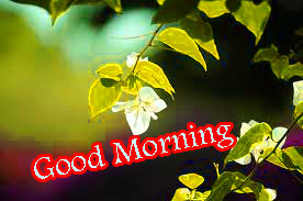 Wonderful Good Morning Images Pictures HD Download