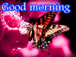 Butterfly Good Morning Wishes Images Pics Wallpaper HD Download