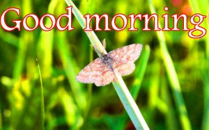 Butterfly Good Morning Wishes Images Wallpaper Pics Download