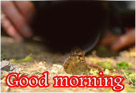 Butterfly Good Morning Wishes Images HD Download