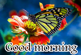 252 Butterfly Good Morning Wishes Images Pics Hd Download