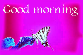 Butterfly Good Morning Wishes Images Pictures HD Download