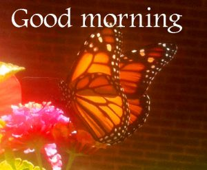 Butterfly Good Morning Wishes Images Wallpaper HD Download